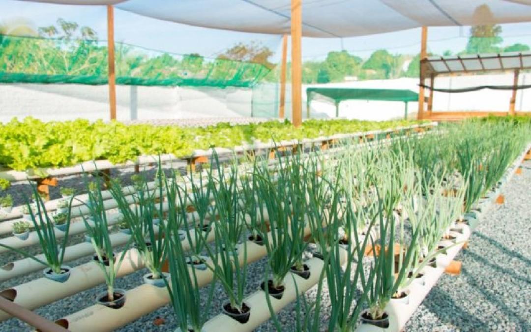 Como Fazer uma Horta Hidropônica Doméstica